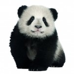 Muursticker Panda uit the Zoo Family van Studio Bluebird