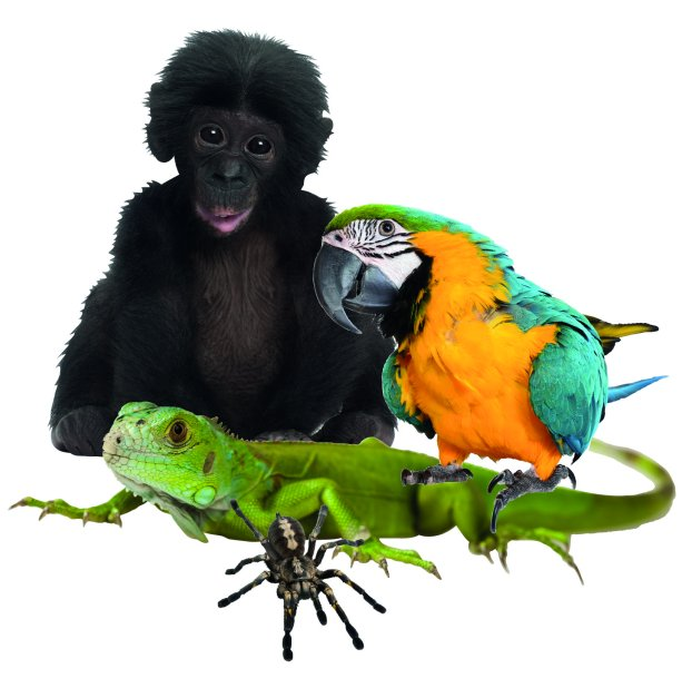 Muursticker Zoo Family Set 6 van Studio Bluebird